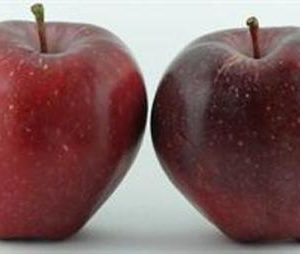 Apple Red Delicious - PB12/18