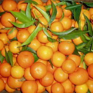 Mandarin Clementine - PB10