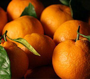 Mandarin Satsuma - PB10