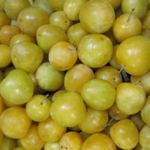 Plum Vincents Gold - PB12/18