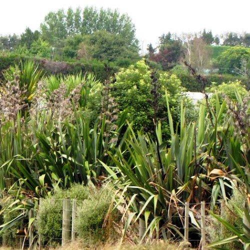 Nz Native Plants 500