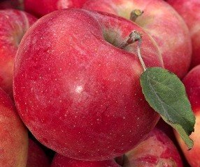 Apple Triple Grafted Pacific Rose/ Royal Gala/ Granny Smith- PB18