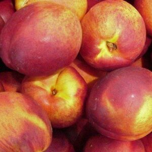 Nectarine Red Gold - PB12/18