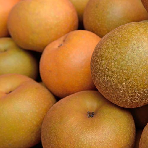 Nashi Pears 500