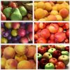 Fruit Tree Pack - 6 Trees