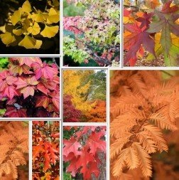 Deciduous Tree Pack 12 Trees