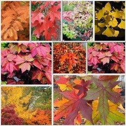 Deciduous Trees Autumn Special