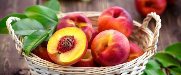 Fruittreespecial2