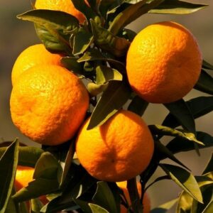Mandarin Silverhill - pb18